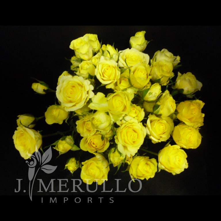 Brilliants Lemon