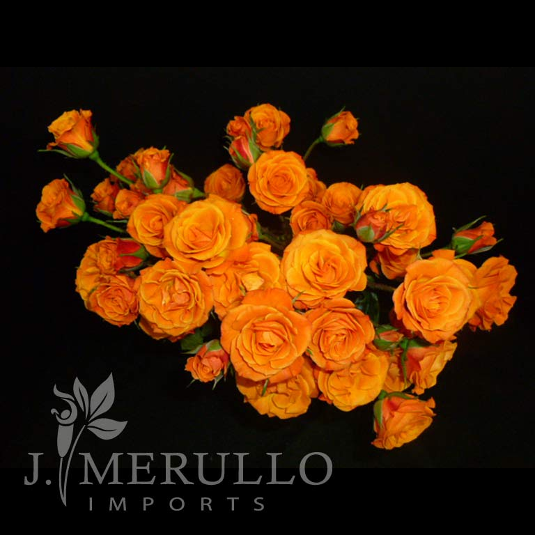 Mambo Orange